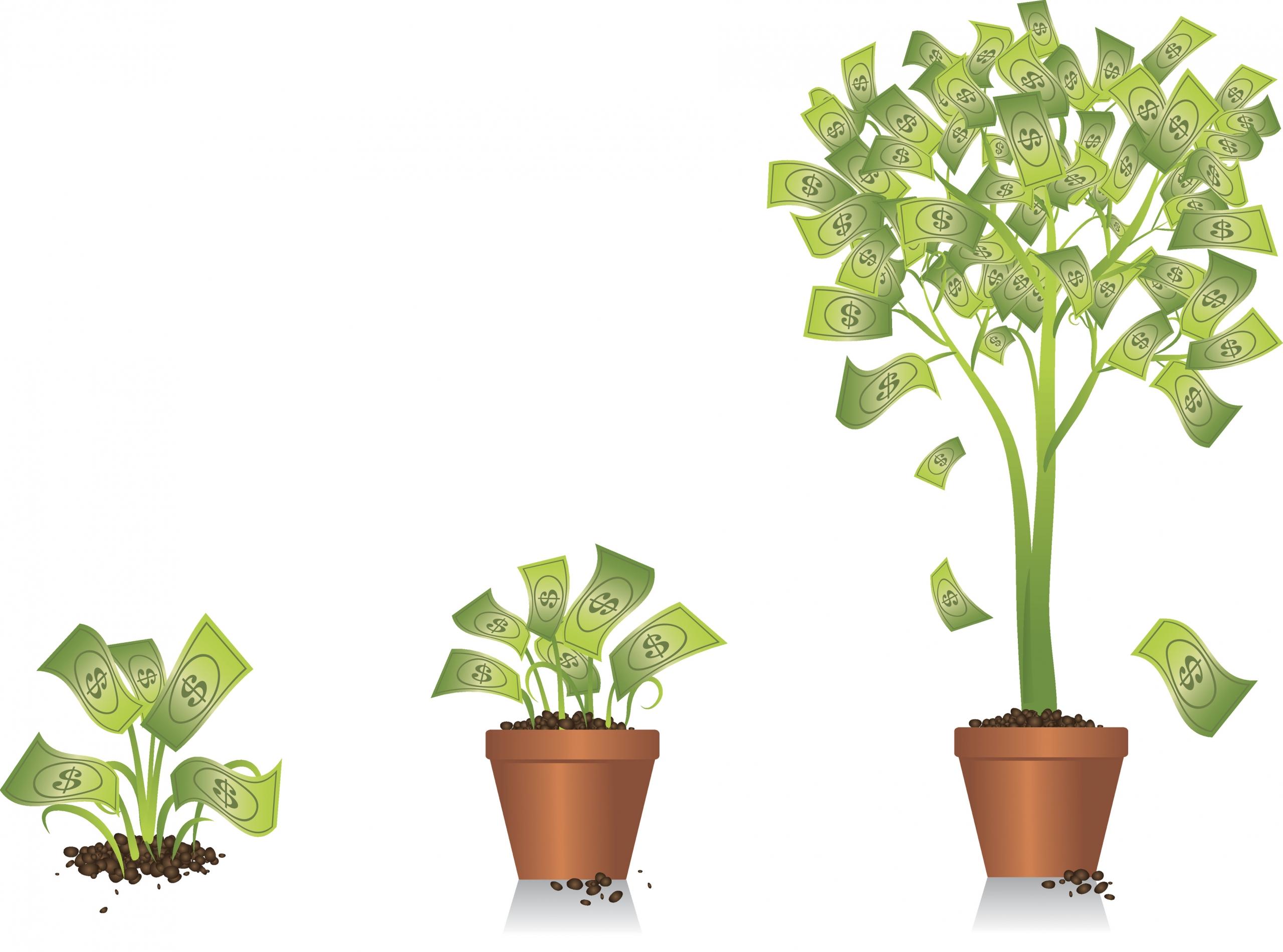 The Money Tree: A Twenty-Year Nexus Testimonial