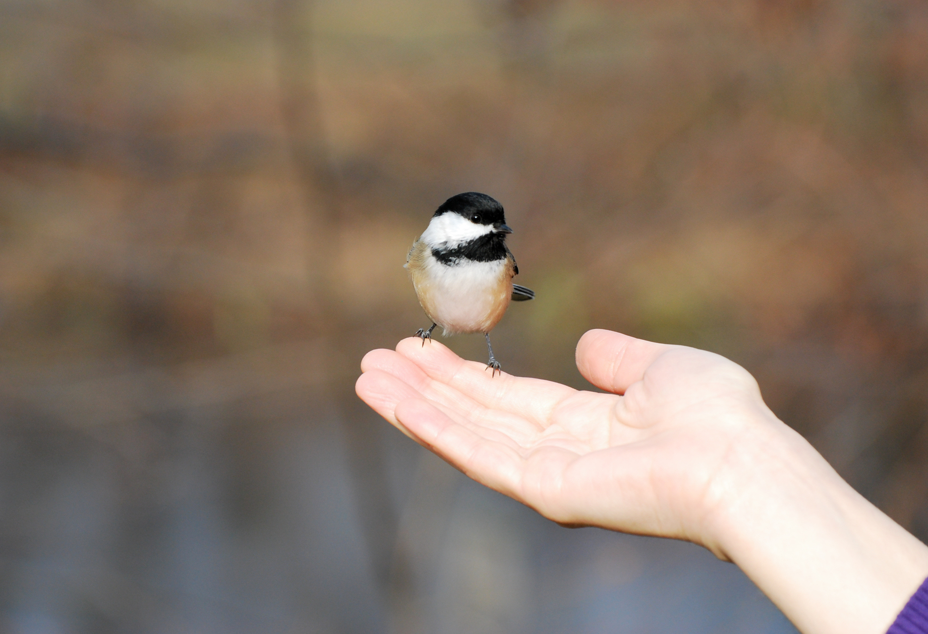 A Bird in the Hand is Worth Two in the Bush